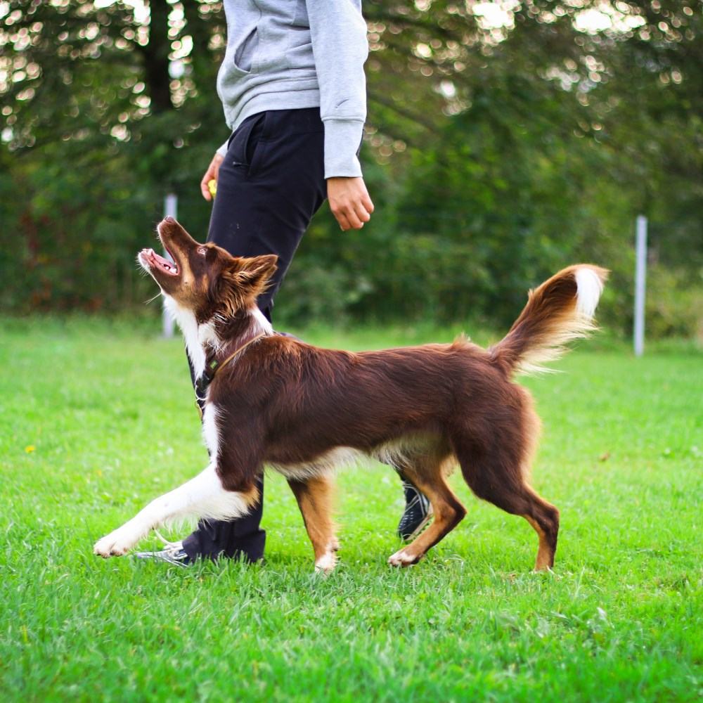 Online-competition-obedience-certificate-course